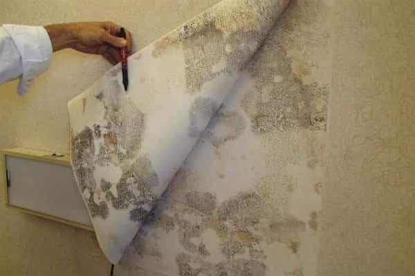 как убрать плесень с обоев и стен